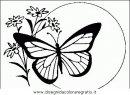 animali/farfalle/farfalla_33.JPG