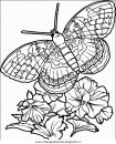 animali/farfalle/farfalla_41.JPG