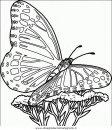 animali/farfalle/farfalla_43.JPG