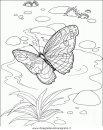 animali/farfalle/farfalla_46.JPG