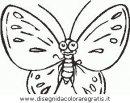 animali/farfalle/farfalla_47.JPG
