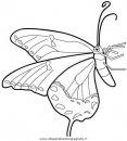 animali/farfalle/farfalla_a02.JPG