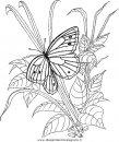 animali/farfalle/farfalla_a03.JPG