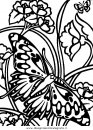 animali/farfalle/farfalla_a06.JPG