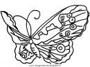 animali/farfalle/farfalla_a07.JPG