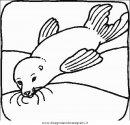 animali/foche/foca_foche_15.JPG