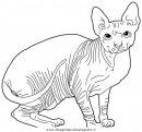 animali/gatti/Sphynx.JPG