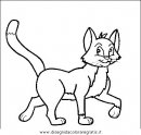 animali/gatti/gatto_014.JPG