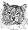 animali/gatti/gatto_048.JPG