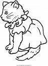 animali/gatti/gatto_063.JPG