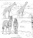 animali/giraffe/giraffa_03.JPG