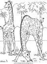 animali/giraffe/giraffa_41.JPG
