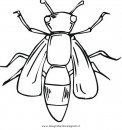 animali/insetti/ape_api.JPG