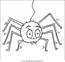animali/insetti/insetto_40.JPG