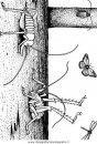 animali/insetti/insetto_47.JPG