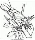 animali/insetti/insetto_49.JPG