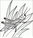 animali/insetti/insetto_52.JPG