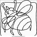 animali/insetti/insetto_95.JPG