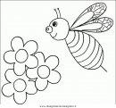 animali/insetti/insetto_98.JPG