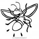 animali/insetti/lucciola_lucciole_01.JPG