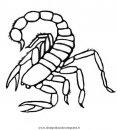 animali/insetti/scorpione_06.JPG