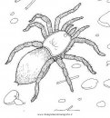 animali/insetti/tarantola_05.JPG