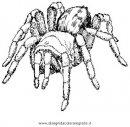 animali/insetti/tarantola_07.JPG