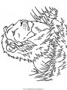 animali/leoni/leone_10.JPG