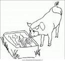 animali/maiali/maiale_40.JPG