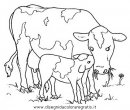 animali/mucche/mucca_toro_18.JPG