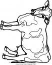 animali/mucche/mucca_toro_19.JPG