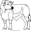 animali/mucche/mucca_toro_21.JPG