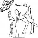animali/mucche/mucca_toro_22.JPG