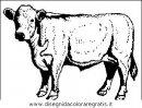 animali/mucche/mucca_toro_25.JPG
