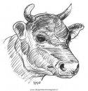 animali/mucche/mucca_toro_37.JPG