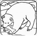 animali/orsi/orso_015.JPG