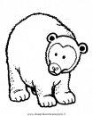 animali/orsi/orso_orsi_bear3.JPG