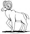 animali/pecore/muflone.JPG