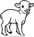 animali/pecore/pecora_1.JPG