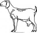 animali/pecore/pecora_2.JPG