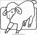 animali/pecore/pecora_5.JPG