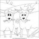 animali/pecore/pecora_pecore09.JPG