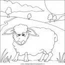 animali/pecore/pecora_pecore10.JPG