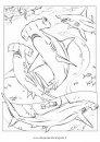 animali/pesci2/pesce_martello_1.JPG