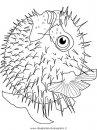 animali/pesci2/pesce_pesci_007.JPG