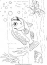 animali/pesci2/pesce_pesci_113.JPG