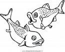 animali/pesci2/salmone_salmoni_2.JPG