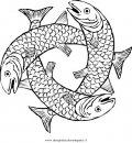 animali/pesci2/salmone_salmoni_4.JPG