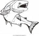 animali/pesci2/salmone_salmoni_5.JPG
