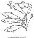 animali/pesci2/sardine.JPG